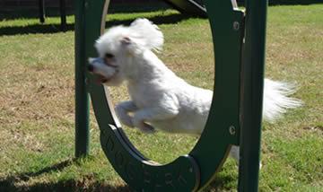 Dog Playground Hoop Jump