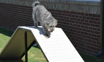 Dog Playground Slides